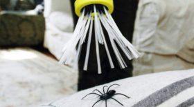 attrape araignees