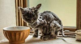 chatte abandonnée métamorphosée