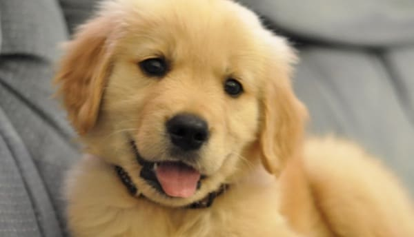 application chien adoption