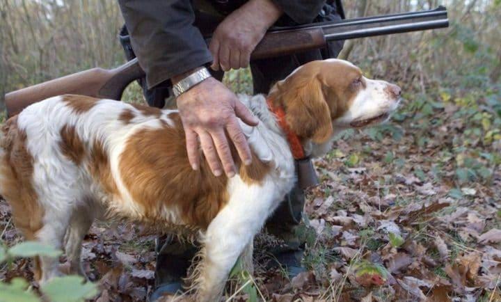 un chien abattu par un chasseur