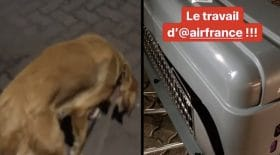 chienne maltraitée par air France