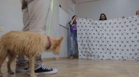 Les réactions de ces chiens abandonnés sont juste grandioses