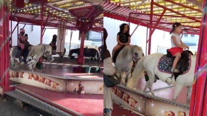 manèges poneys vivants autorisés