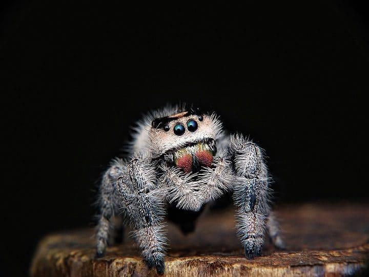 mygale-araignée-commune-brive-la-gaillarde