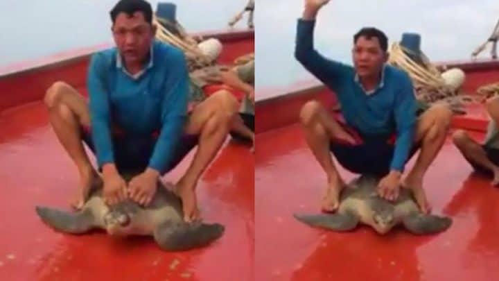 pêcheur monte carapace de tortue