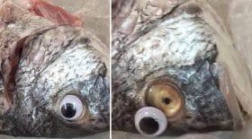 poissons poissonnier yeux en plastique