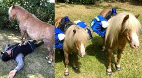 poneys massage cardiaque