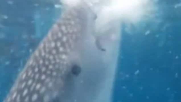 Un homme a failli se faire aspirer par un requin