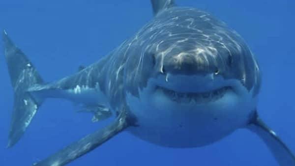 Il se fait mordre par un requin et attrape une fasciste nécrosante