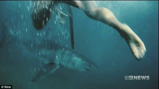ils rencontrent des requins blancs