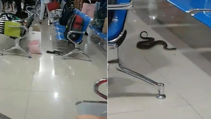 serpent rampe aéroport panique