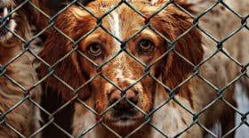 ses chiens lui sont retirés, elle va les voler au refuge