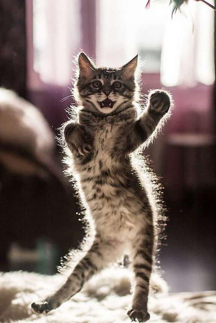 animaux-danse-vétérinaire-video