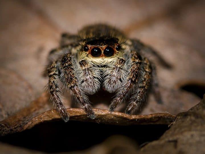 Airaignée spider ma,