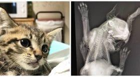 chaton-acte-barbarie-vétérinaire-facebook-coup-de-gueule.jpg