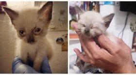 chaton-aveugle-petite-chatte-animal