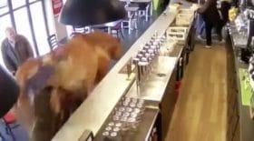 un cheval dans un bar