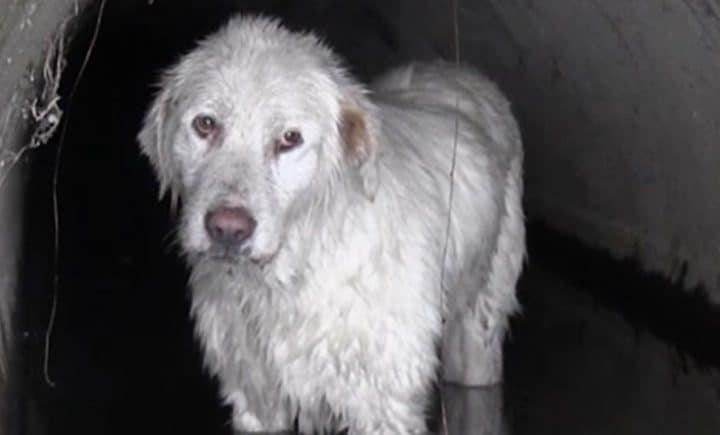 chien sauvé Roumanie
