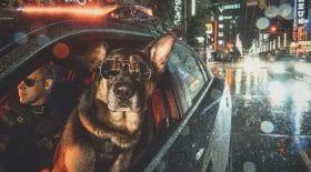 chiens policiers