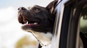 ellon-musk-voitures-dog-mode (2)