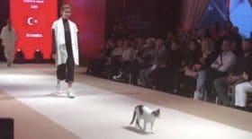 chat défile