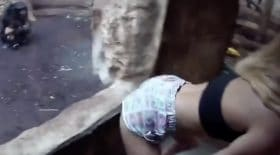 elle twerke devant un chimpanzé