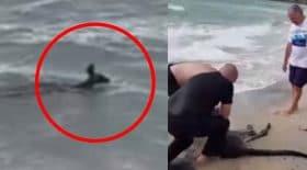 sauvetage en mer kangourou se noie