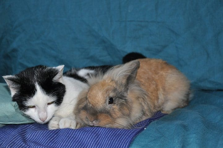 lapin-aide-chat-impressionnant