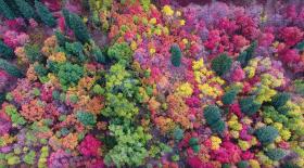 magnifiques-couleurs-automne-court-metrage-drone (2)
