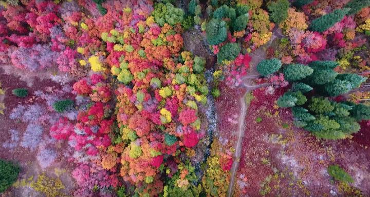magnifiques-couleurs-automne-court-metrage-drone (3)
