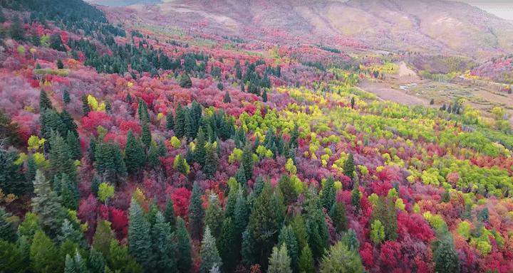 magnifiques-couleurs-automne-court-metrage-drone (4)