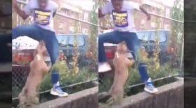 La vidéo d'un pitbull, visiblement bien décidé à mordre les bijoux de famille d'un jeune homme, et qui le poursuit sans relâche. Le jeune homme panique