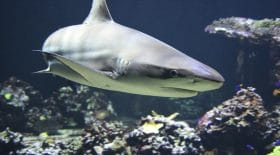 requin-saute-bateau-père-3-enfant-crocodile