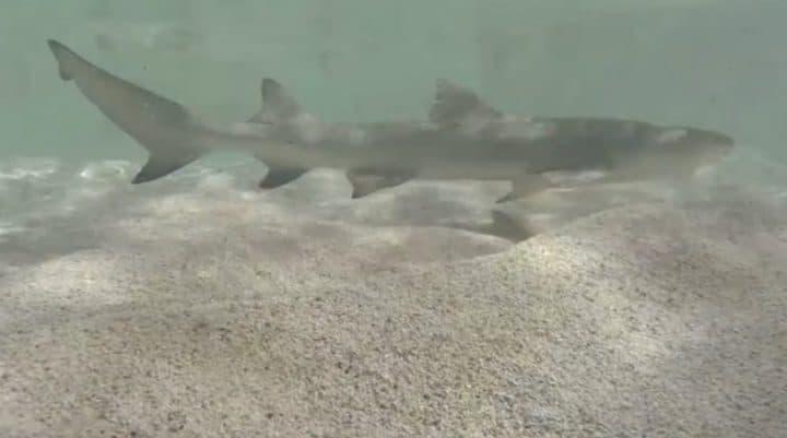 une femme tombe dans un bassin à requins