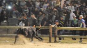 taureau-arènes-spectatrice-décède-Gard