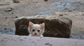 un-chaton-errant-Americain-rencontre-histoire-4-ans