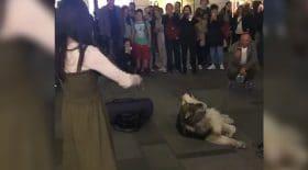 husky chante avec une violoniste