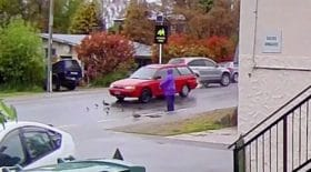voiture écrase famille de canards
