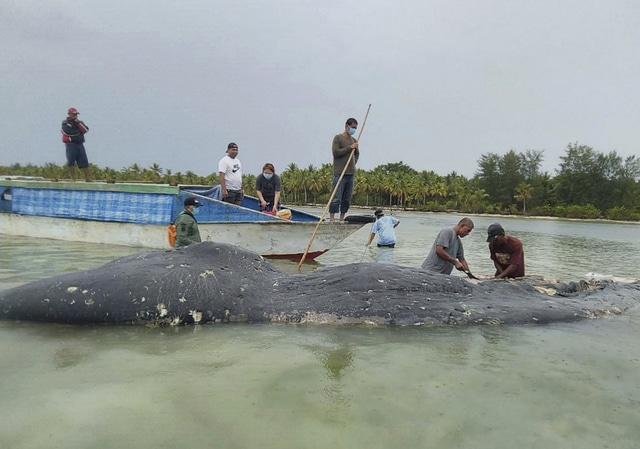 cachalot mort indonésie