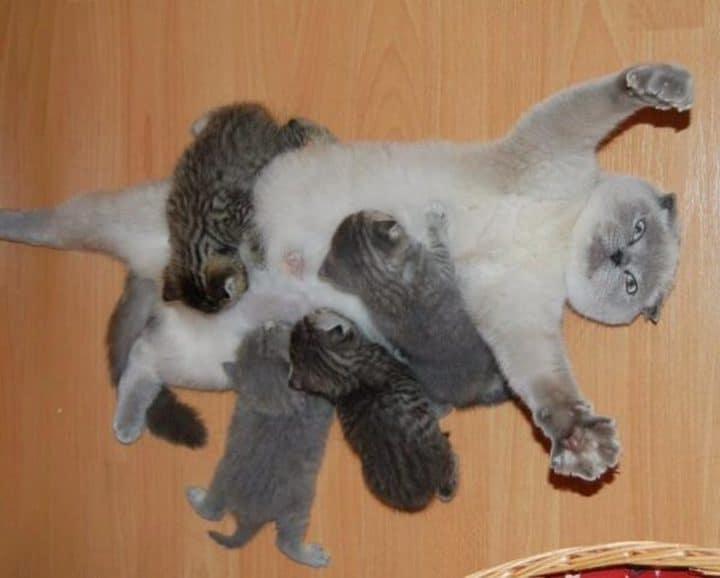 maman chat et bébés