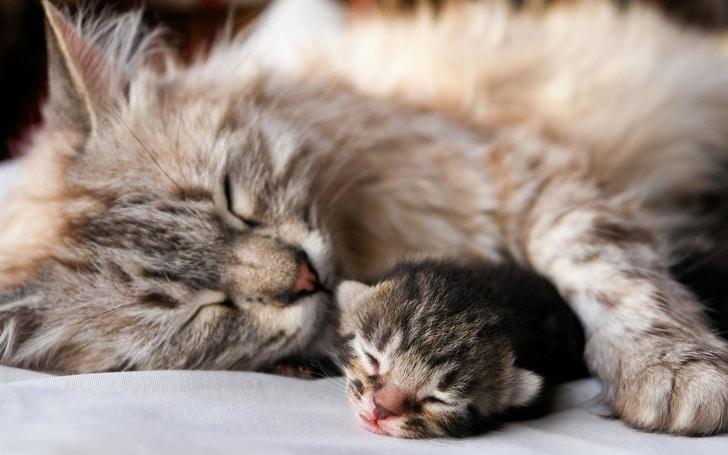 20 photos craquantes d'une maman et de son petit chez les animaux