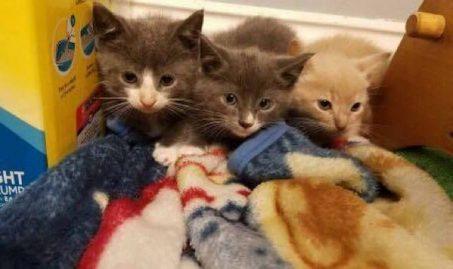 Les chatons en pleine santé site à sauvetage réussi