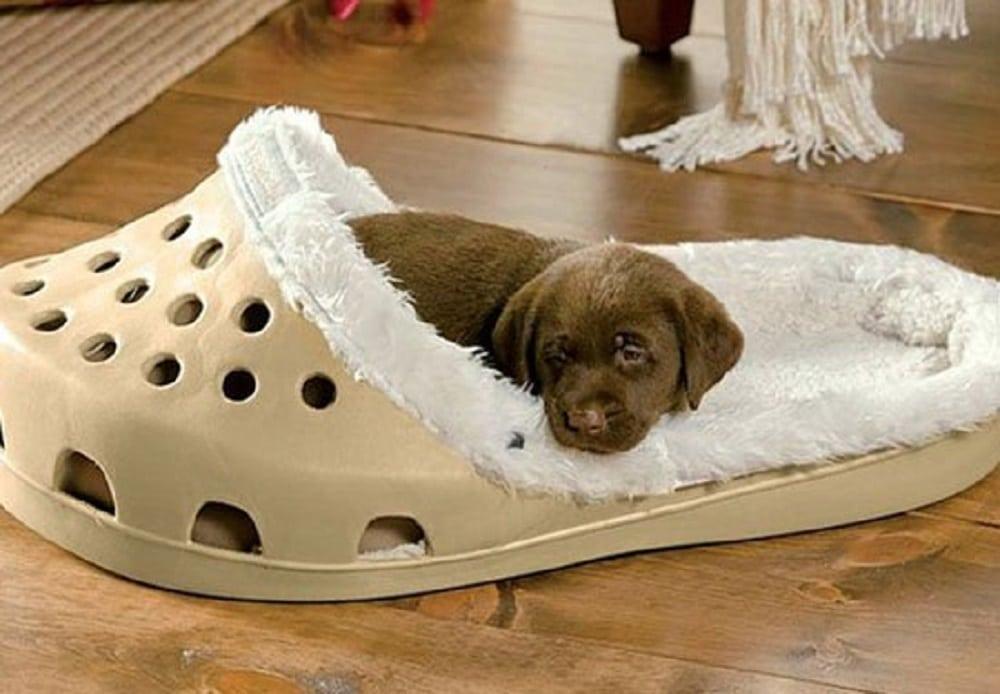 Marre de vous faire bouffer vos pantoufles ? Découvrez les chaussons géants pour chiens et chats