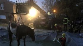 cheval-piscine-pompiers