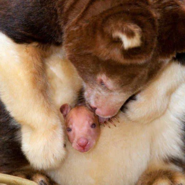 maman chien bébé