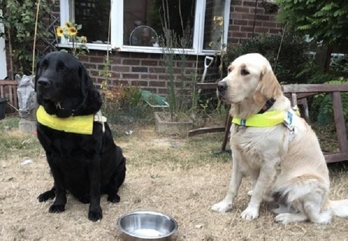 chien-guide-abandonné-loi-règle-peter-nevin
