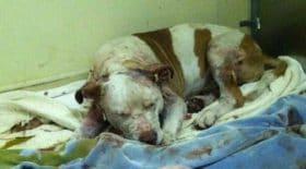 chien-Pacino-euthanasié-amour-sauvetage