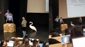 cygne maltraitance animale université clermont