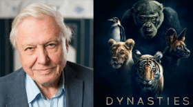 dynasties-david-animaux-série-Attenborough-écologie