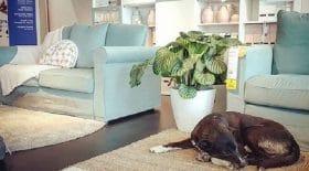 Un Ikea en Sicile servant de refuge aux chiens abandonnés